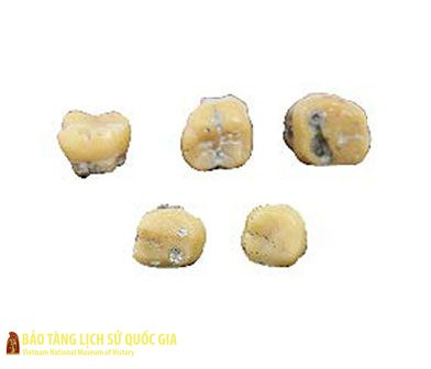 Teeth of hominids
